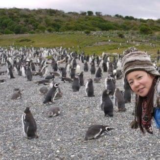 ペンギン家